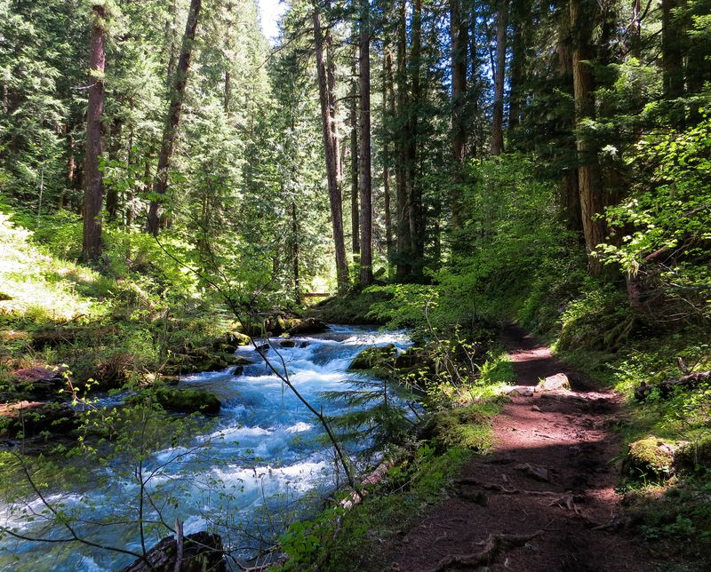 It All Flows Downstream: Unique opportunity to plan for the future of our public lands in Central Puget Sound