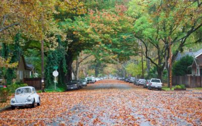 Urban Trees Save The US Up To $12 Billion Annually