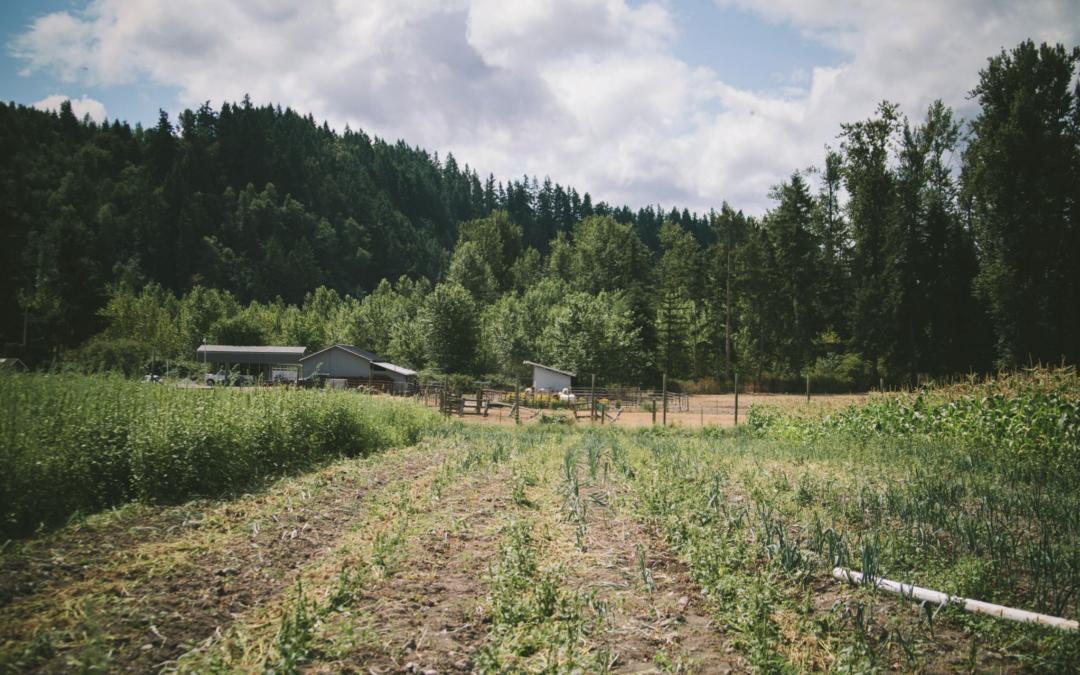 Washington Farmland Trust Releases New Annual Report